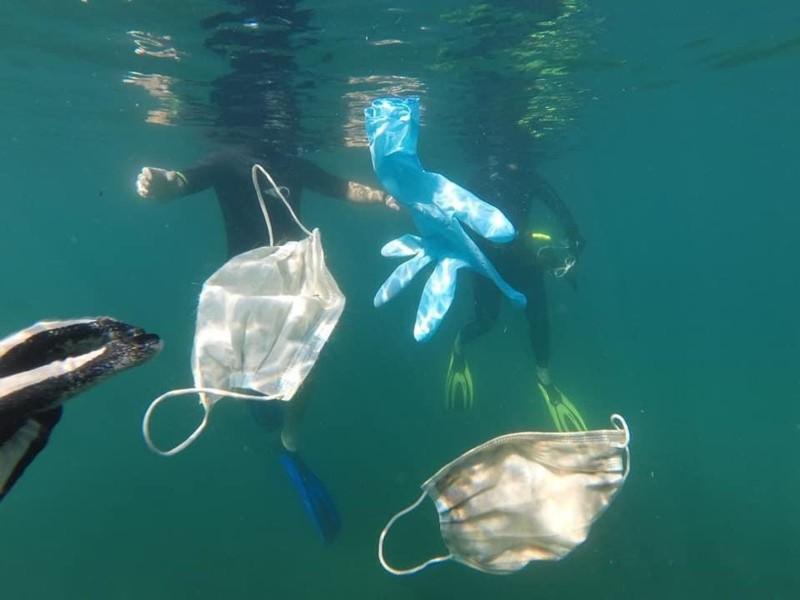 Advierten por riesgo de cubrebocas en el mar causando enredos