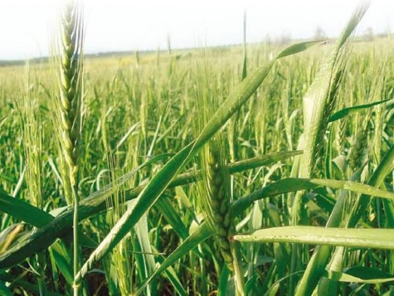 Afecta agricultores reducción de presupuesto para el campo