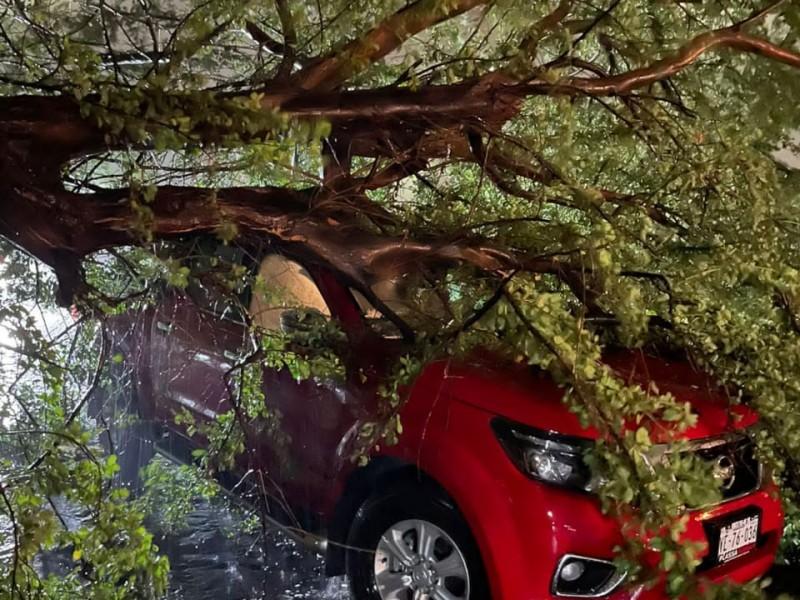 Afectaciones por lluvias y fuertes vientos en Ciudad Obregón