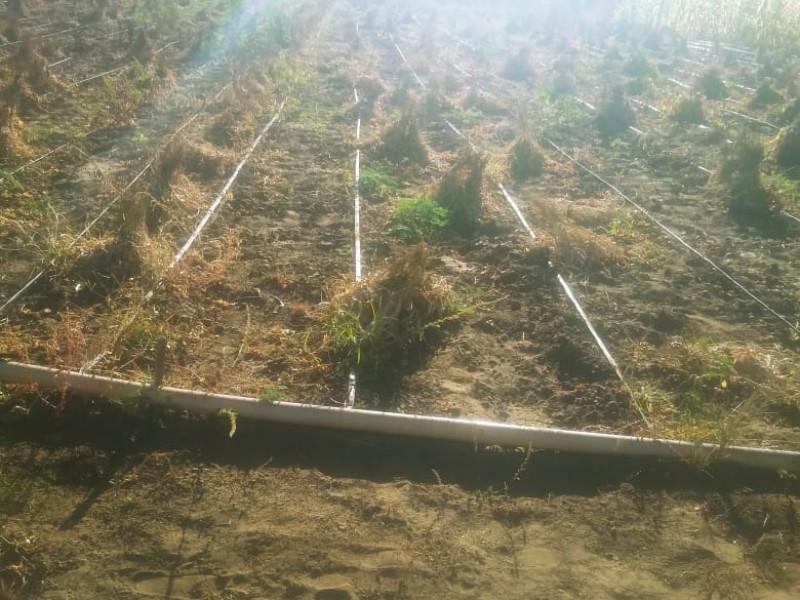 Afectan bajas temperaturas a productores locales