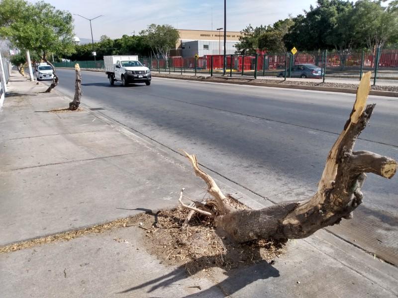 Agradecen levantar restos de árboles en Vértiz Campero