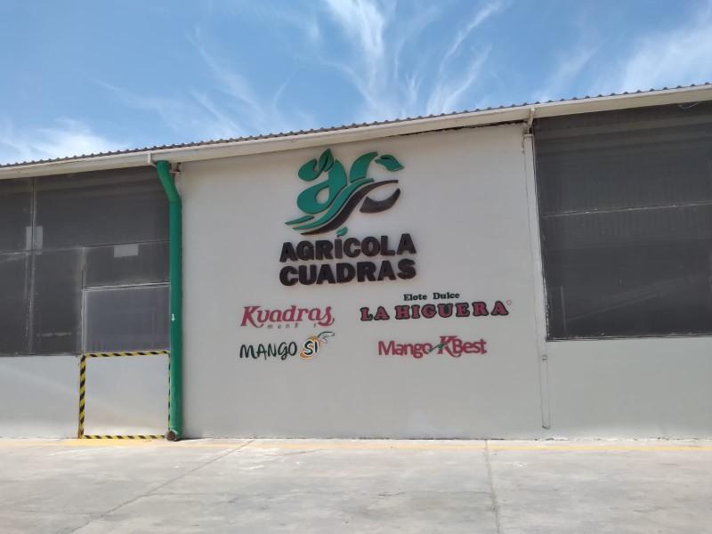Agrícola Cuadras, empresa familiar dedicada a la producción de mango