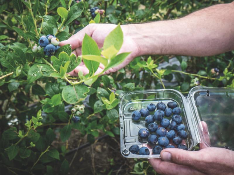 Agricultores buscan evitar intermediarios para comercializar sus productos
