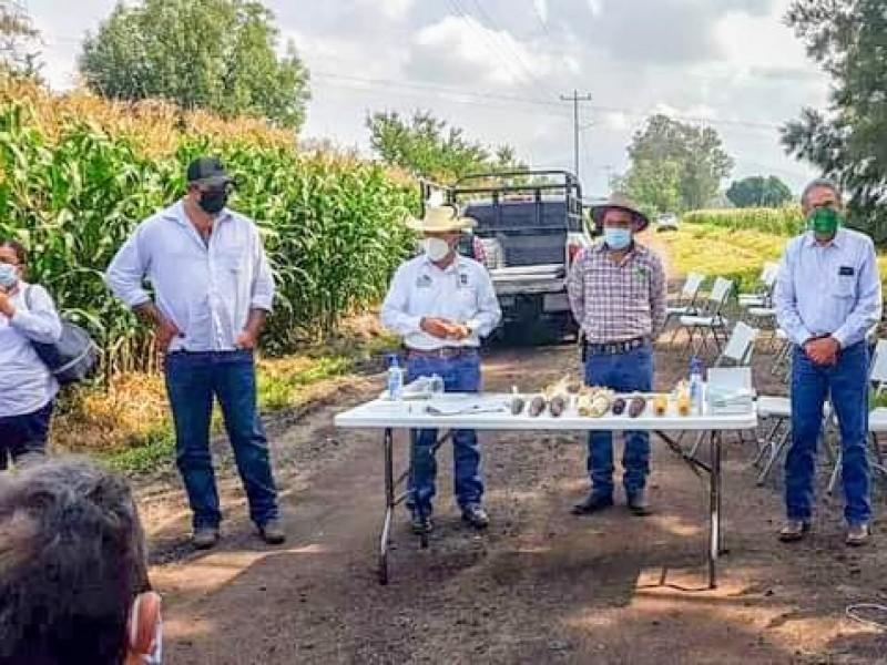 Agricultores buscan nuevas variedades de maíz para mejorar productividad