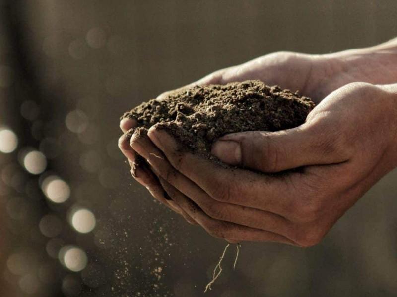 Agricultores contienen plagas con el uso de biofertilizantes