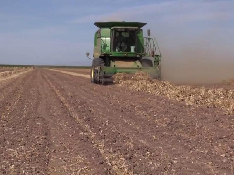 Agricultores en espera de apoyos económicos