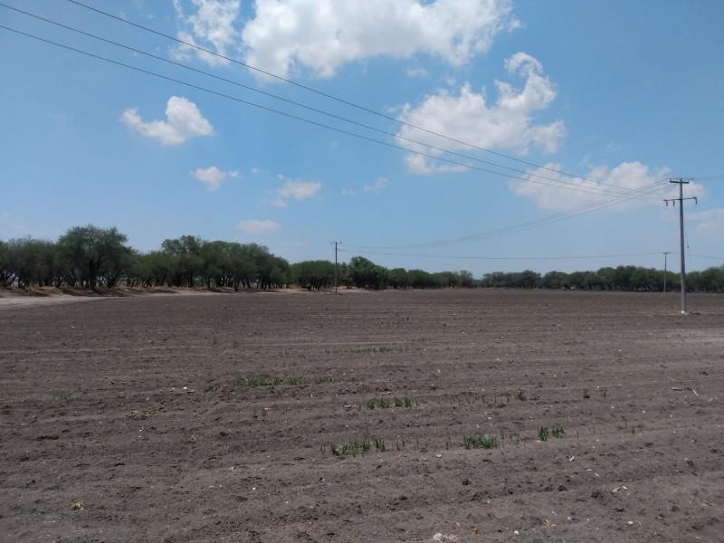 Agricultores guanajuatenses enfrentan situación crítica por bajas lluvias