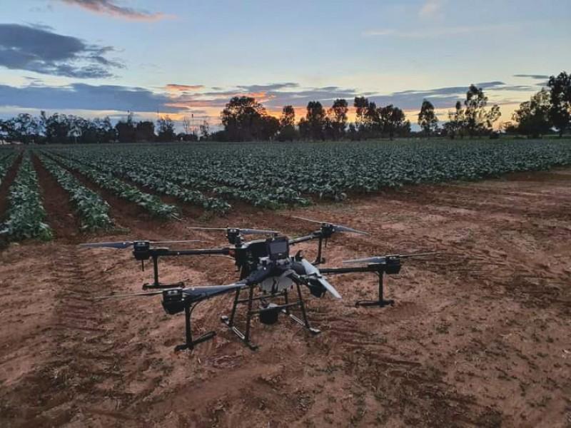 Agricultores optan por tecnologías sustentables, como el uso de drones
