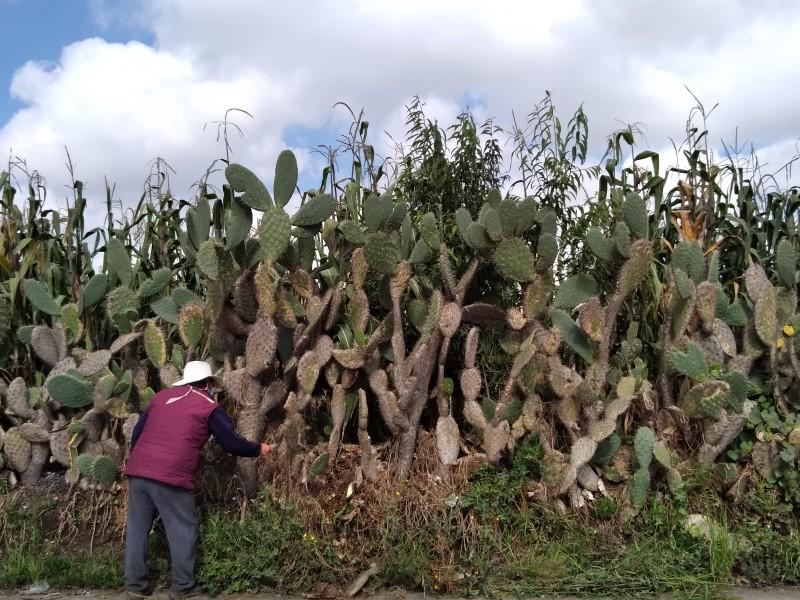 Agricultores pierden sus cosechas derivado de las lluvias