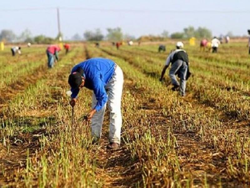 Agricultura genera más de 5 mil empleos en Guaymas