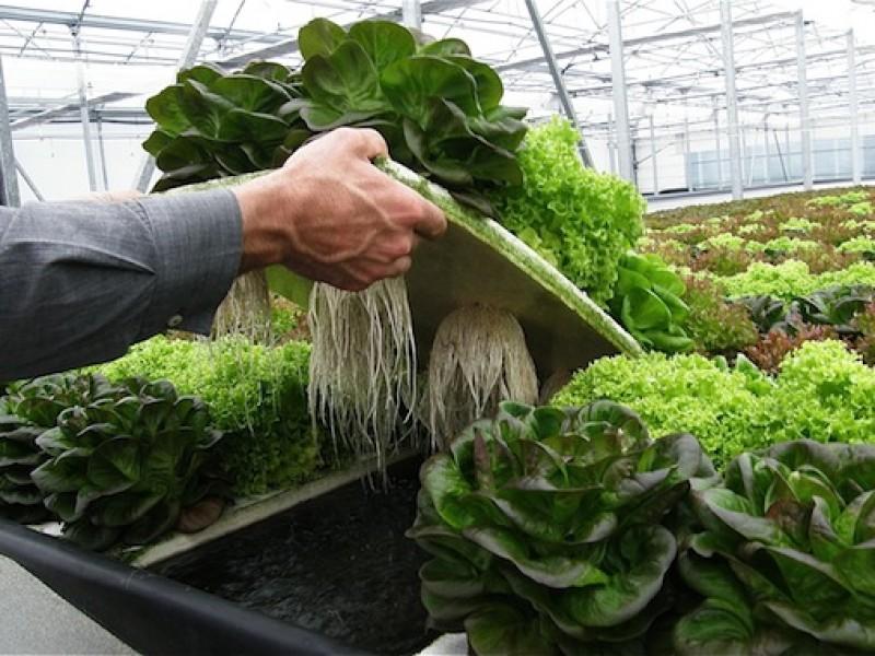 Agricultura sustentable, necesaria pero no está de moda