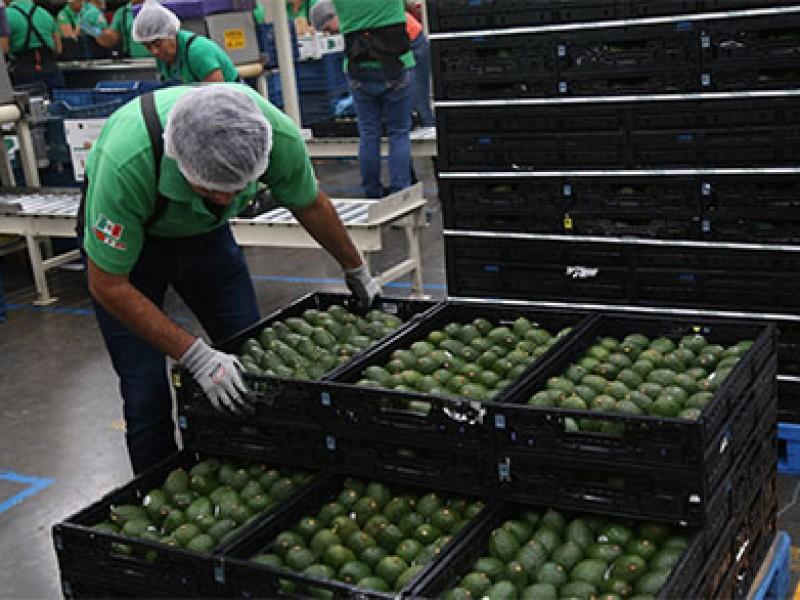 Aguacate, caro en México pero exportado a EE.UU