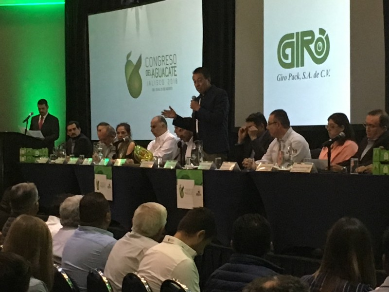 Aguacate de Jalisco con crecimiento potencial:SEDER