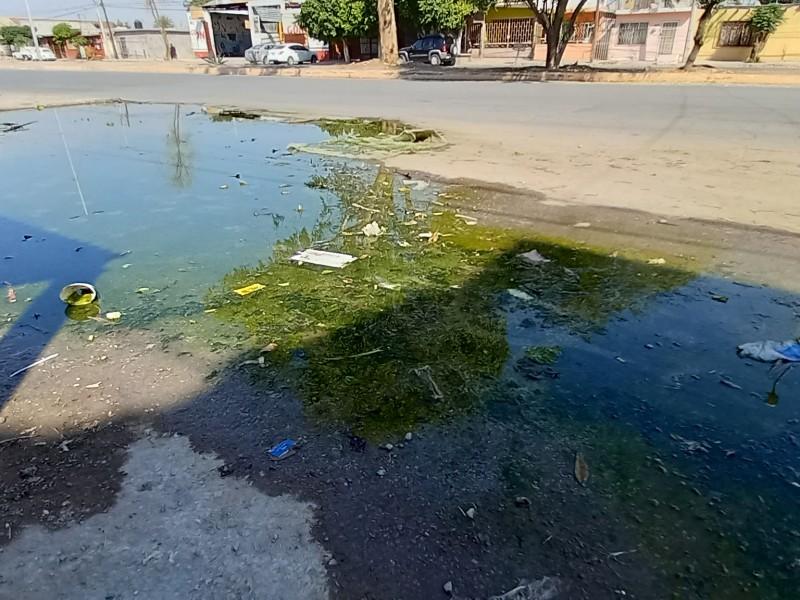 Aguas verdes provocan olores insoportables y foco de infección