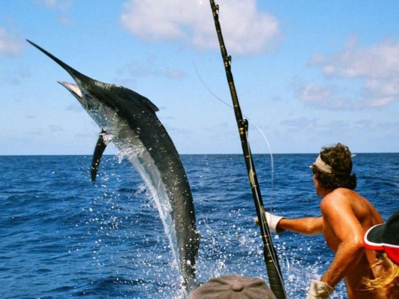 Al 30% reservaciones para pesca deportiva 2021-2022 en Zihuatanejo