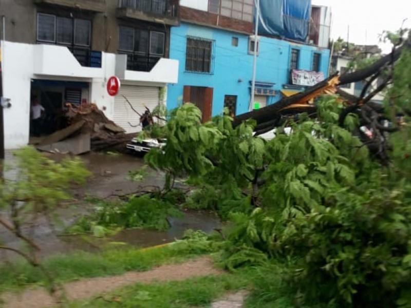 Al menos 20 árboles caídos por fuertes lluvias en Oaxaca