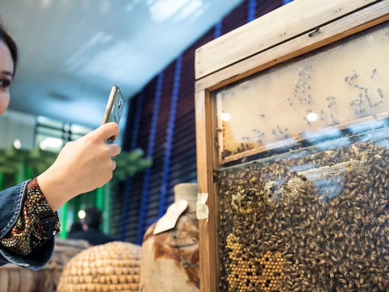 Alarmante la baja población mundial de abejas