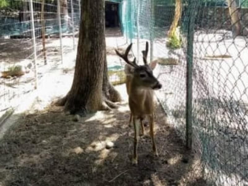 Alcalde reconoce muerte de animales en zoológico