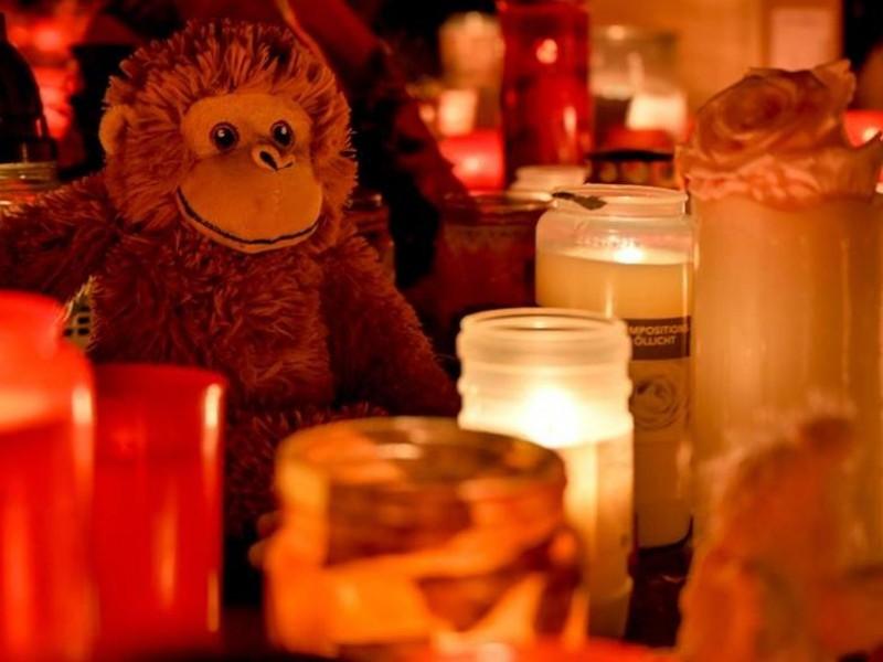 Alemania: Mueren 30 simios por incendio en zoológico