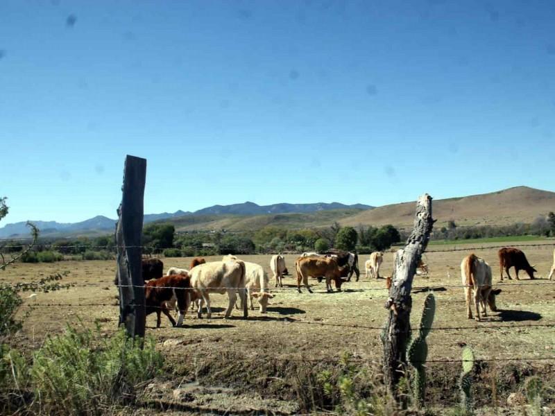Alerta ante sequía de 2020