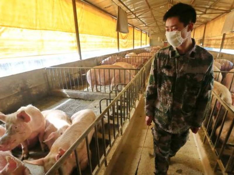 Alerta en China y el mundo por virus porcino G4
