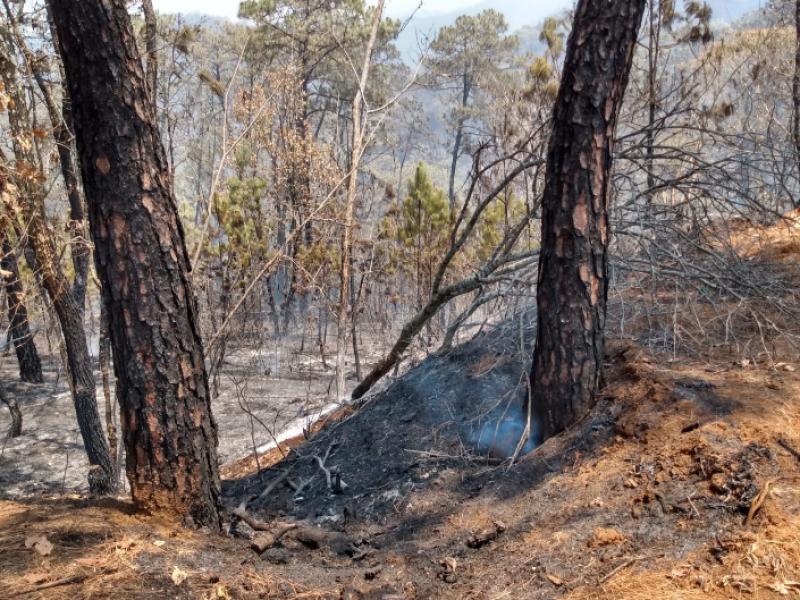 Alerta por aumentos de incendios forestales en la región