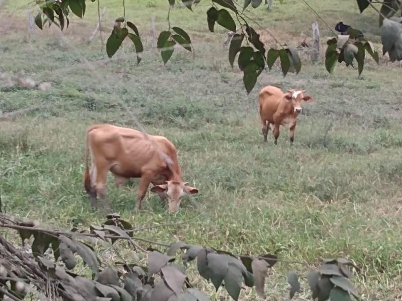 Alertan a ganaderos por casos de rabia paralítica