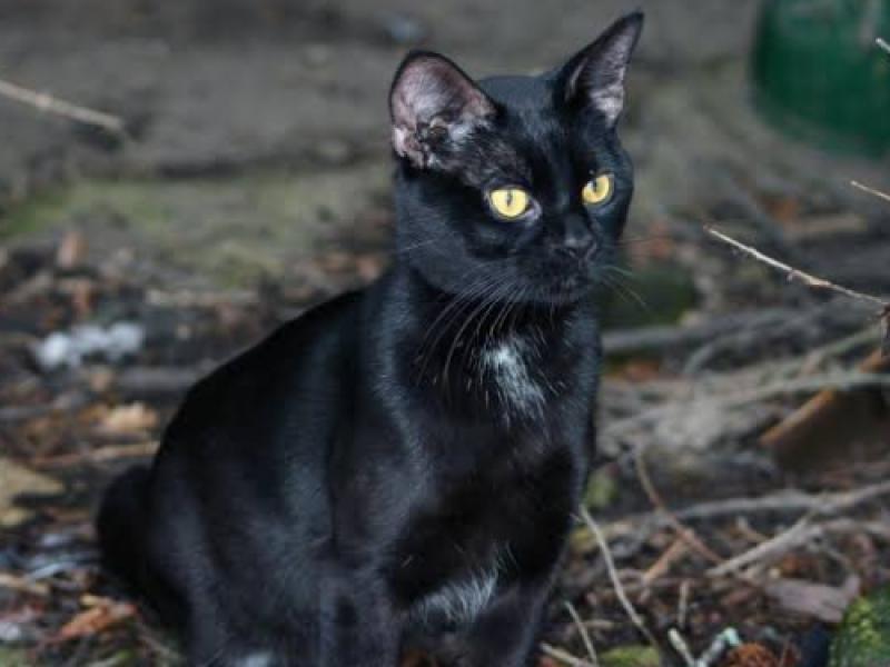 Alertan, no dar en adopción a mascotas negras por brujería