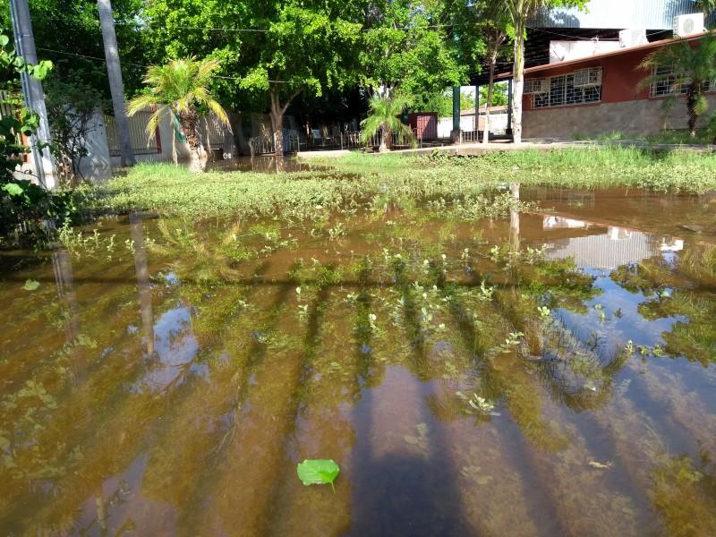Alrededor de 160 escuelas en Sinaloa presentan daños