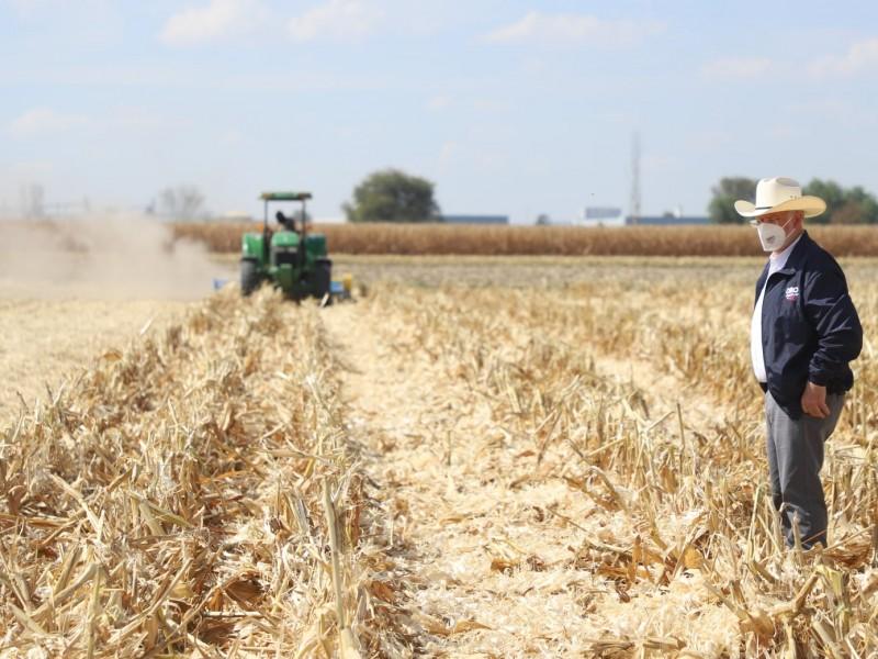 Alto rendimiento de maíz: búsqueda de una economía digna