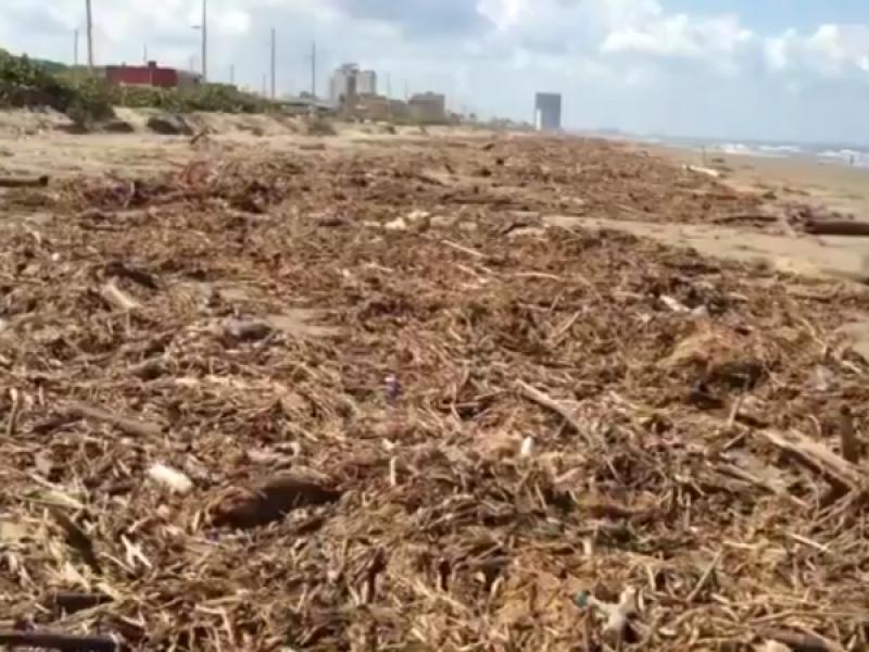 Amanecen playas de Coatzacoalcos con gran cantidad de palizada.