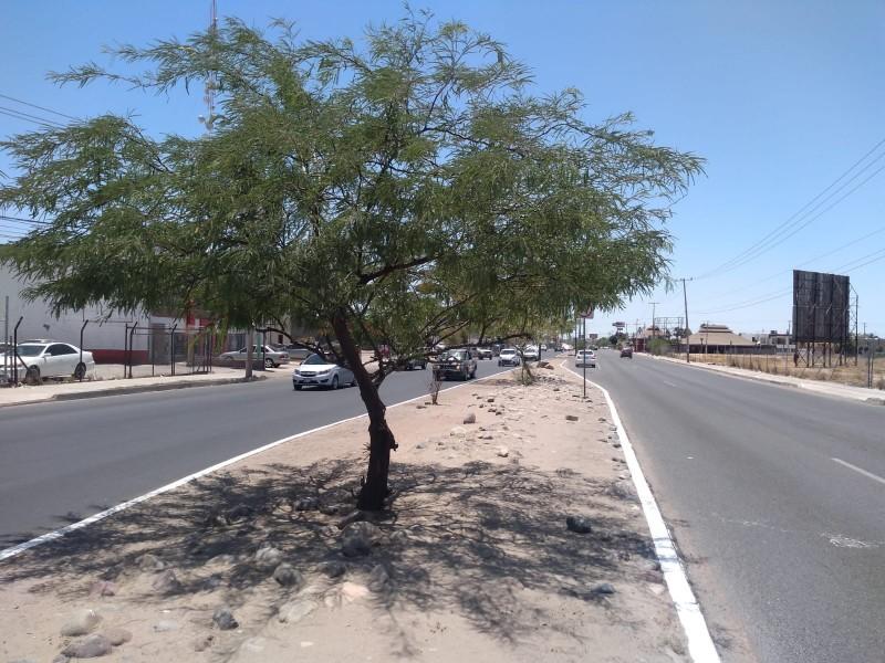 Ambientalistas reforestarán los bulevares Quiroga y Progreso