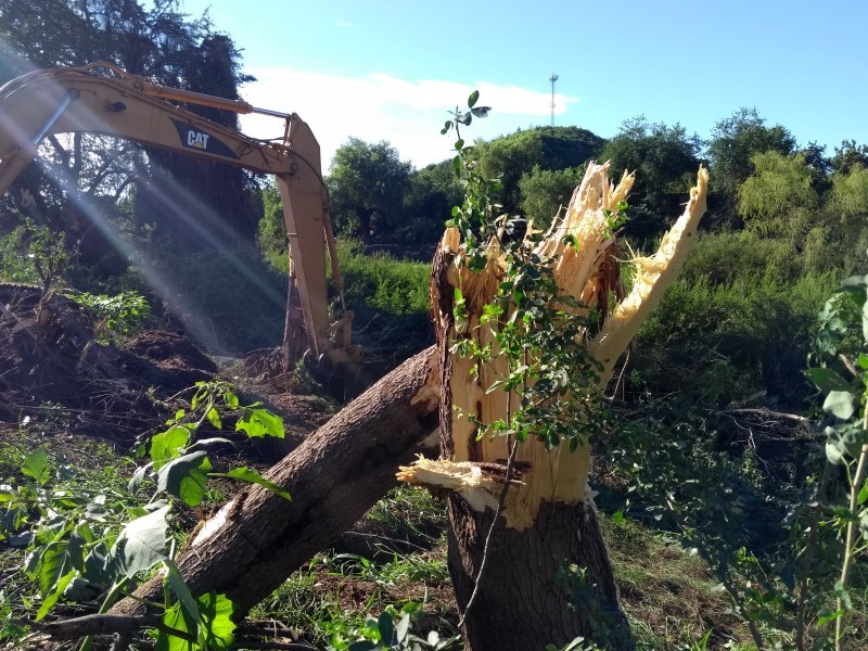 Ambientalistas reforestarán Río Fuerte