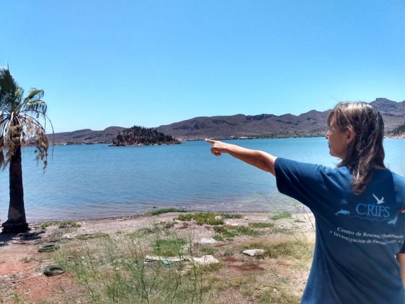 Analiza CRIFS impacto en Bahìa de Guaymas