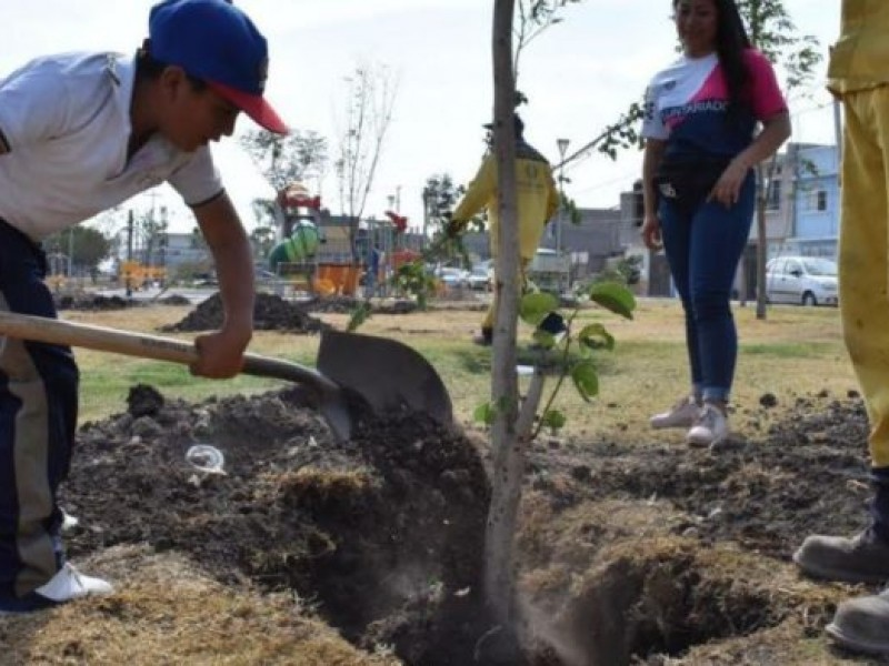 Analizan áreas en la capital para sembrar más árboles