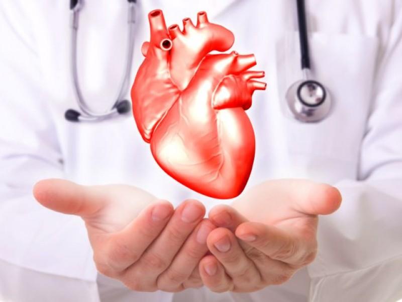 Analizan el desarrollo del corazón humano