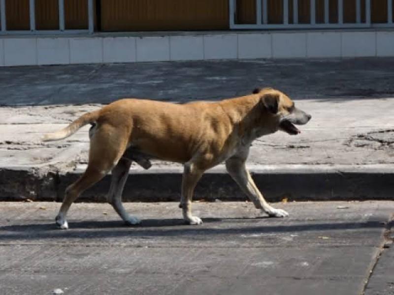 Animales atropellados, víctimas invisibles de la velocidad