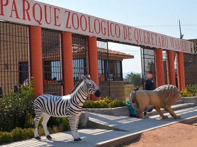 Animales decomisados ahora viven en Zoológico de Querétaro