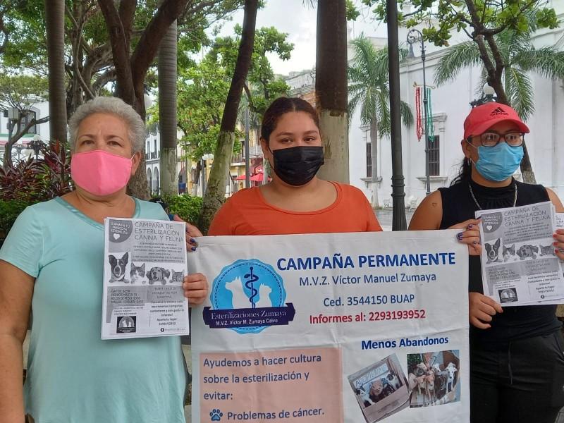 Animalistas Independientes invitan a campaña de esterilización