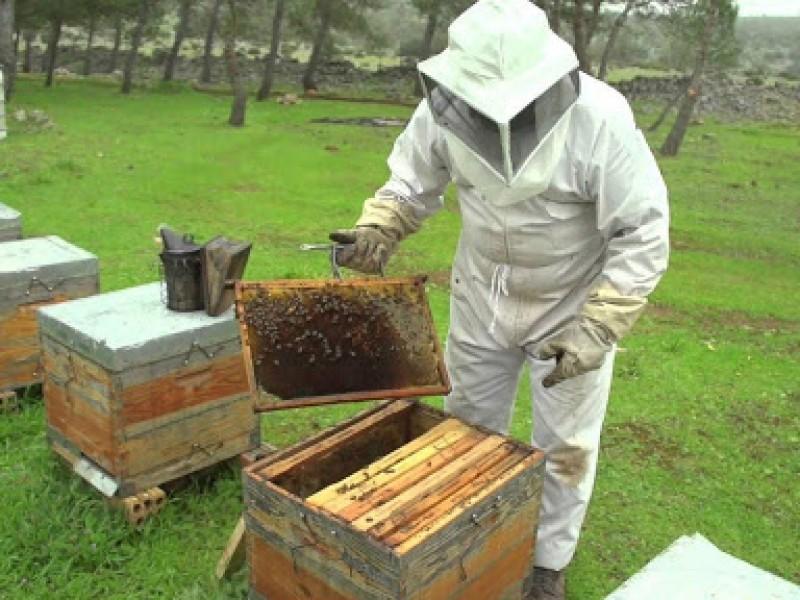 Apicultores tomarán medidas ante invasión de colmenas