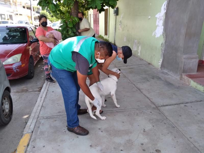 Aplican vacunas antirrábica canina y felina en El Espinal