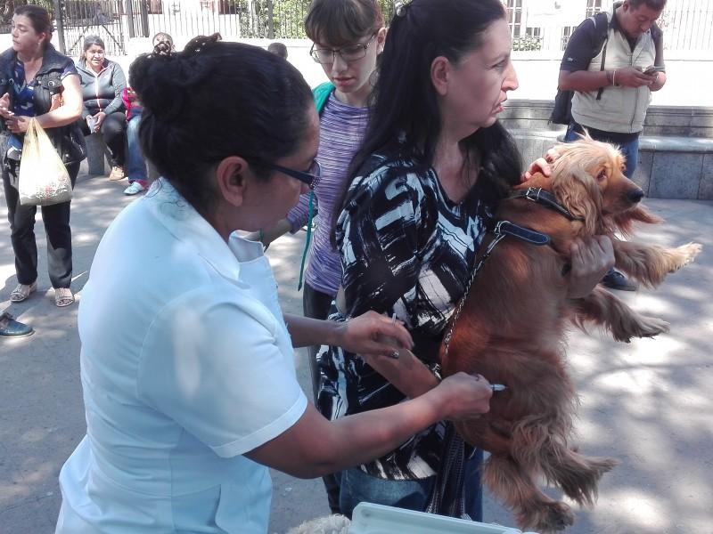 Aplicarán 2 mil 400 vacunas antirrábicas en Jacona
