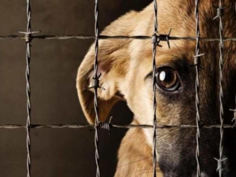 Aprueban endurecer penas contra maltrato animal en Puebla