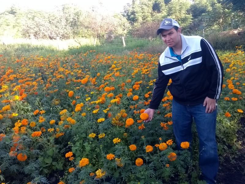 Apuestan productores jaconenses por cultivo de cempasúchil