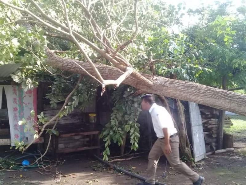 Árbol cae en vivienda de Mazatán