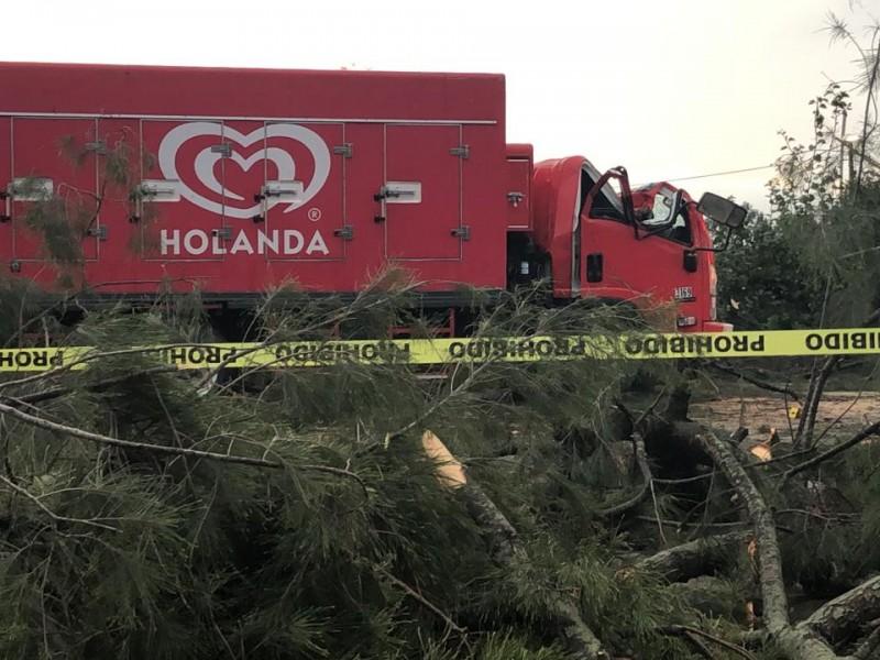 Árbol cae sobre camión y deja un muerto