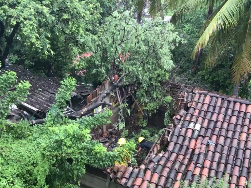 Árbol cae sobre vivienda, trasladan damnificados al DIF