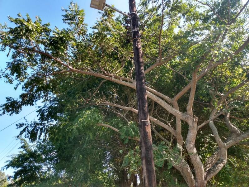 Árbol topa con cables de alta tensión; temen un accidente