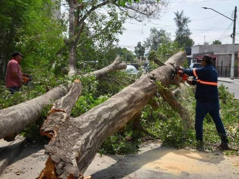 Árboles caídos e inundanciones deja lluvia en Hermosillo