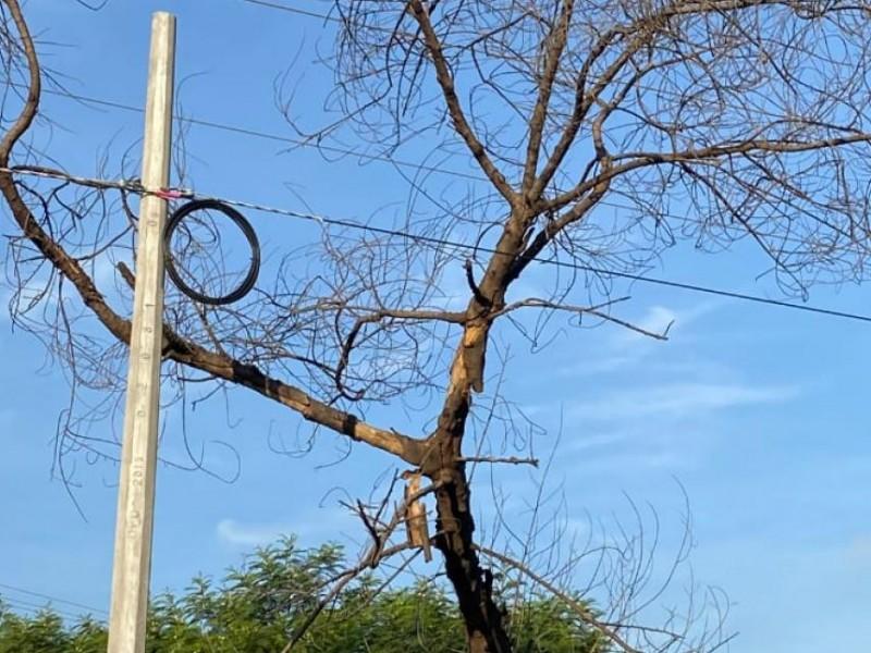 Árboles secos serán retirados en TGZ